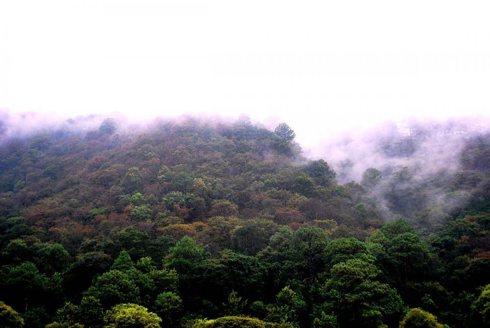 File:Bosque de pino-encino en Chimaltenango.jpg