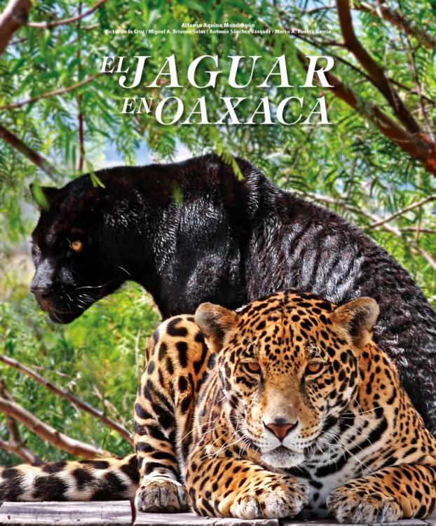 Resultado de imagen para jaguar oaxaca