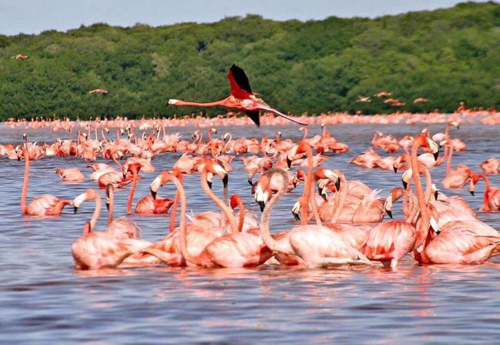 Resultado de imagen para flamingo yucatan