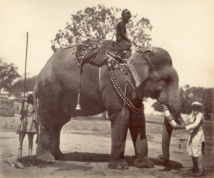 File:KITLV 100445 - Unknown - Elephant with escorts, presumably in Kashmir in British India - Around 1870.tif