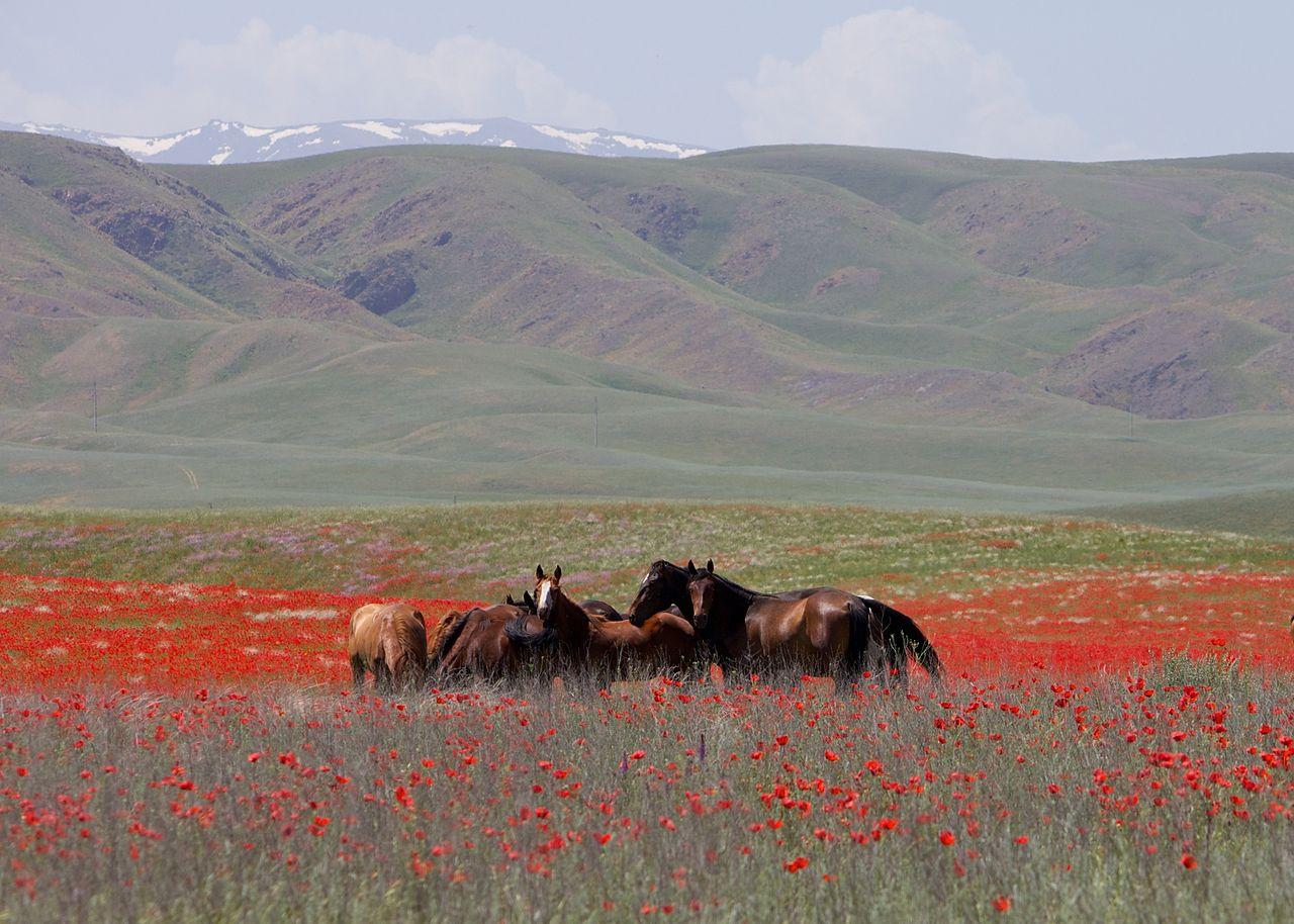 1280px-Horses_in_Kazakhstan.jpg?14589427