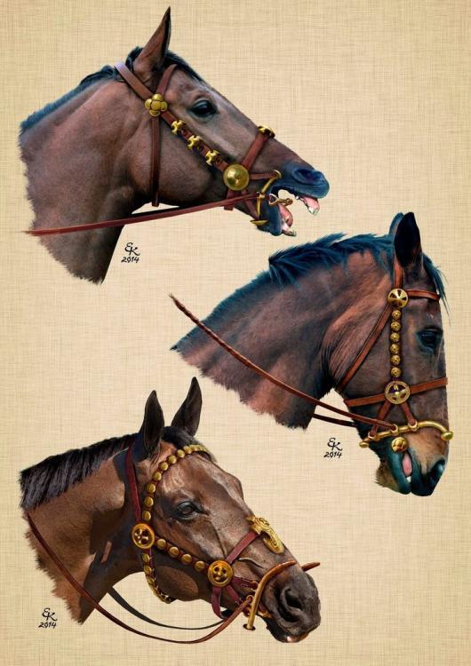 746156d072d6328d98e4c39cb3c611de--horse-armor-central-asia.jpg
