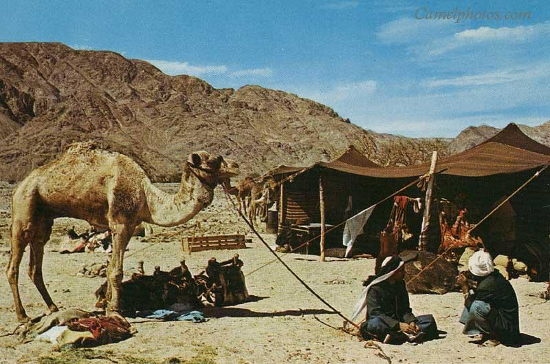 A day and a night in the desert with Bedouin friends « Sam ...