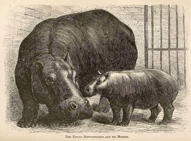 https://upload.wikimedia.org/wikipedia/commons/b/b6/Adhela_and_Guy_Fawkes_1873.jpg