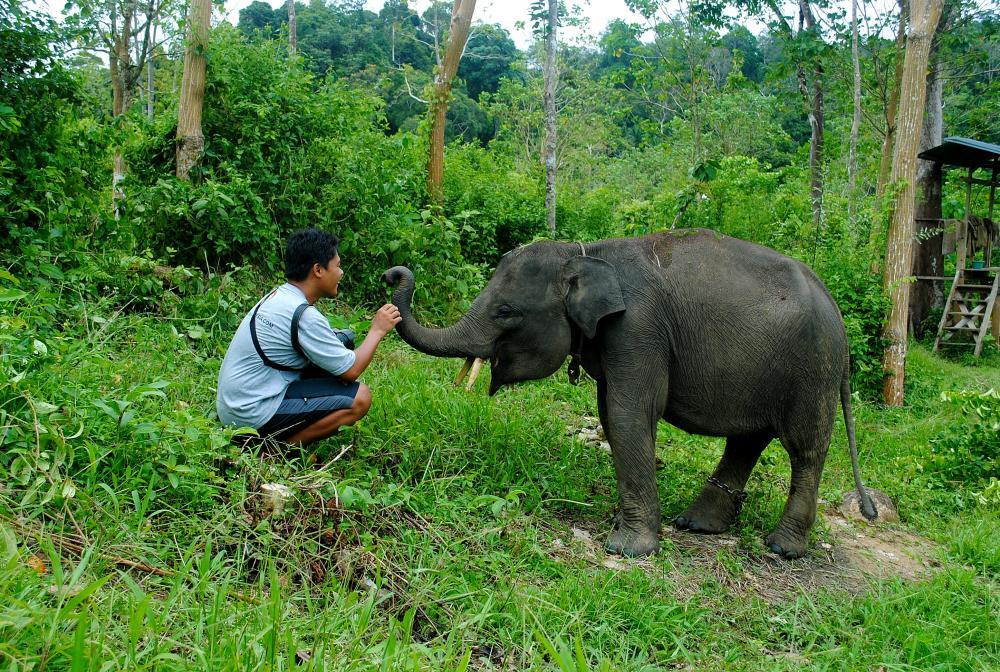 https://upload.wikimedia.org/wikipedia/commons/5/5b/Baby_Elephant_-_panoramio.jpg