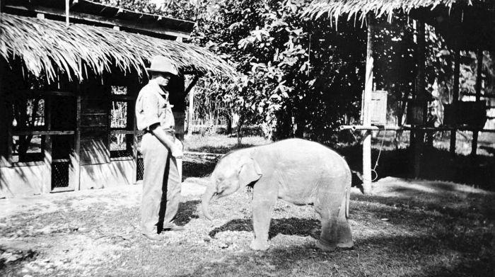 https://upload.wikimedia.org/wikipedia/commons/e/e9/COLLECTIE_TROPENMUSEUM_Een_pas_gevangen_jonge_olifant_Oost-Sumatra_TMnr_10006625.jpg