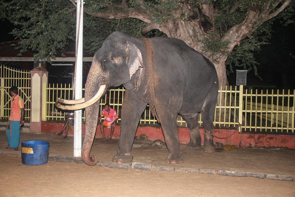 https://upload.wikimedia.org/wikipedia/commons/d/de/Elephant_near_temple_Sri_Lanka.jpg