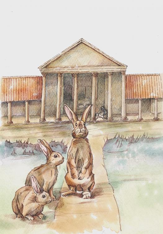 England Roman rabbit