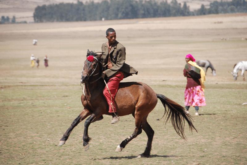 Horse-shot.png