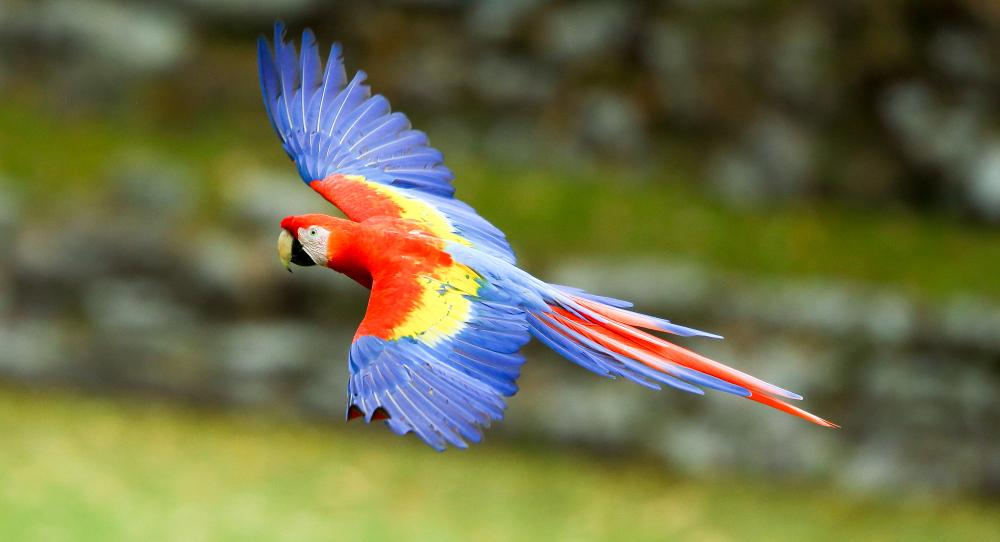 Resultado de imagen para honduran bird