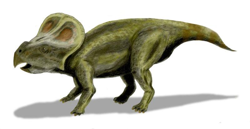 http://dinosaurios.org/wp-content/uploads/2013/09/Protoceratops.jpg