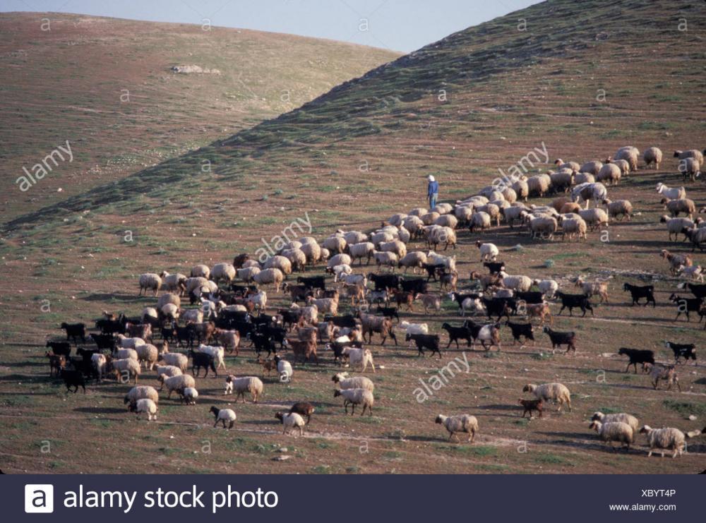 Resultado de imagen para Judean farm ancient