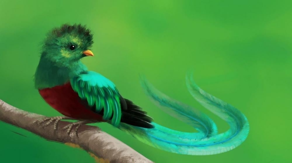 Resultado de imagen para quetzal