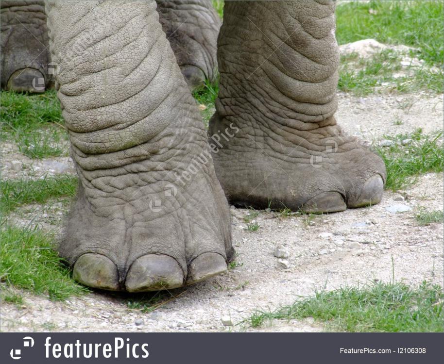 elephant-legs-stock-picture-1106308.jpg