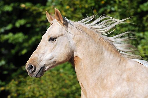 horse-head-profile-wallpaper-3.jpg