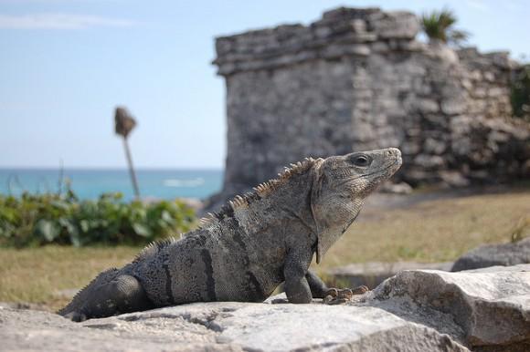 Resultado de imagen para mayan iguana