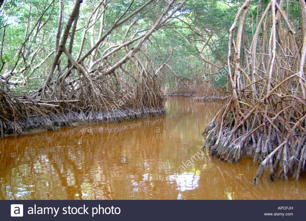 Resultado de imagen para mangrove yucatan