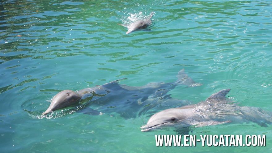 Resultado de imagen para delfin yucatan