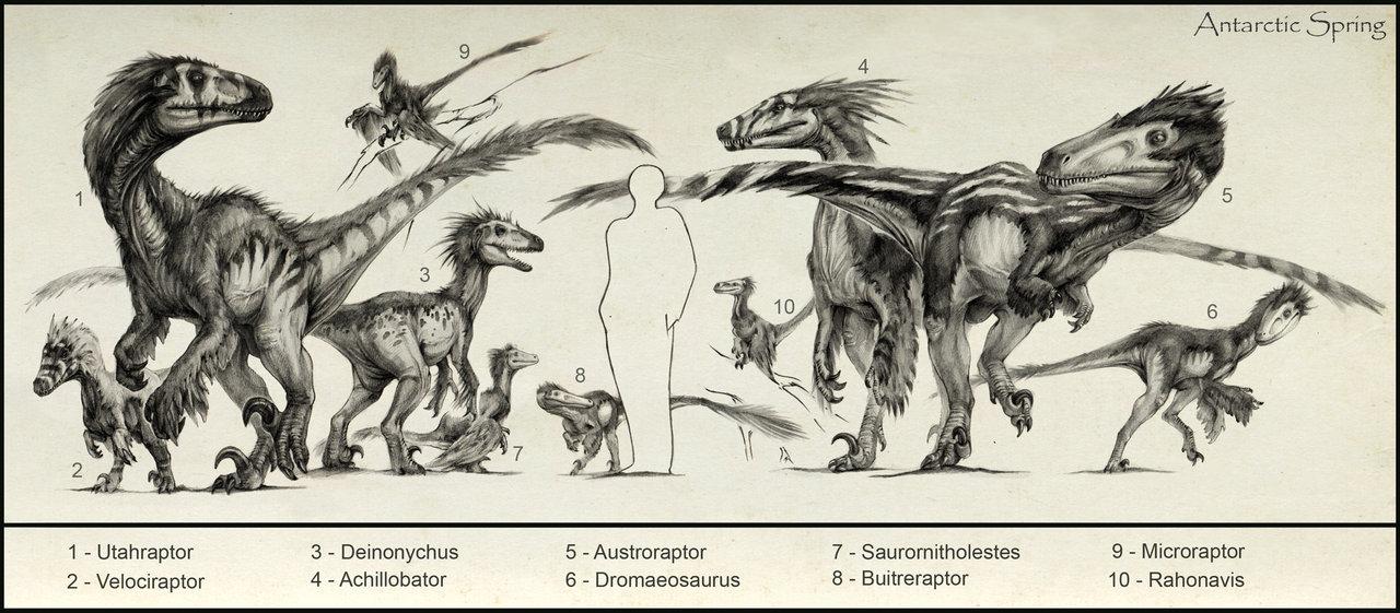 sketches_of_raptors_by_antarcticspring-d