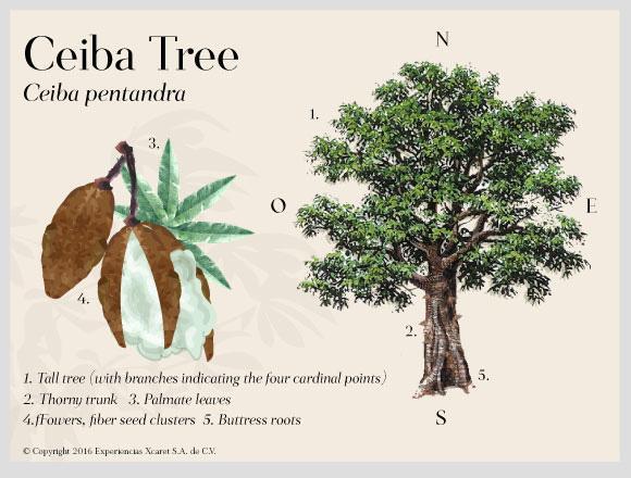 tree-ceiba-cenotes