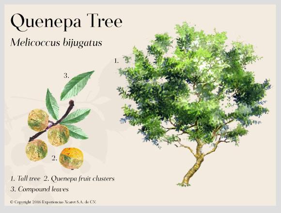 Resultado de imagen para mayan flora trees