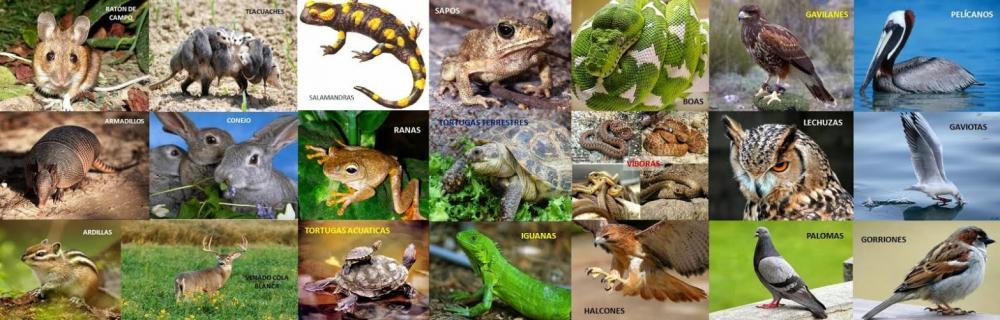 Resultado de imagen para oaxaca fauna
