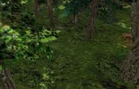 deep_wood-wood2.jpg