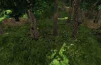 deep_wood-wood1.jpg