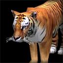 fauna_tiger.png