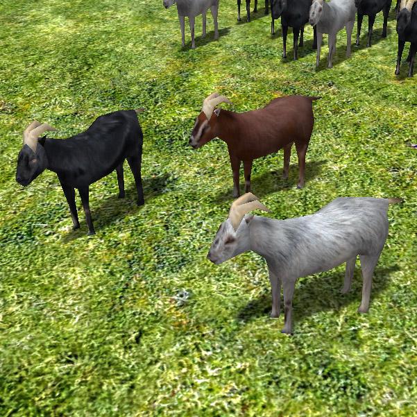 goat-wip-2.jpg