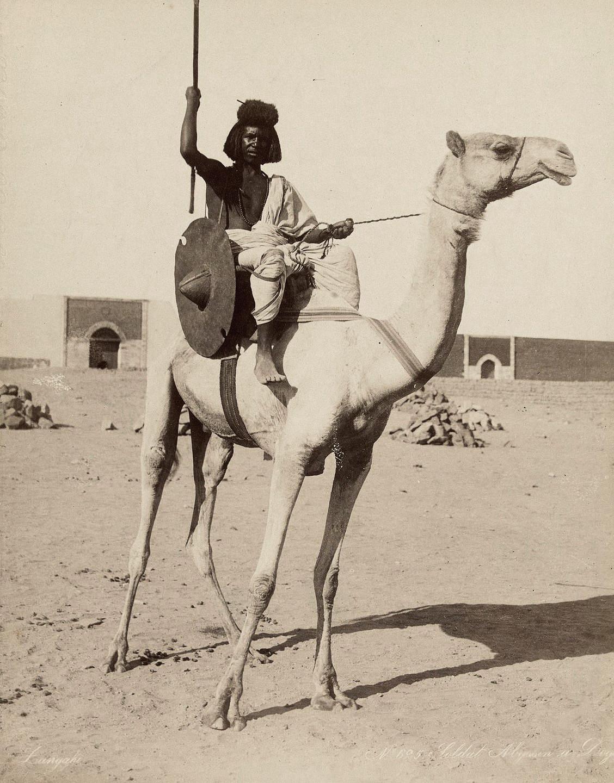 beja camel.jpg