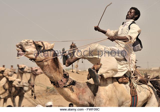 port-sudan-beja-camel-race-fwf09c.jpg.a0bb8c96017511d82c62b5d41a1be456.jpg