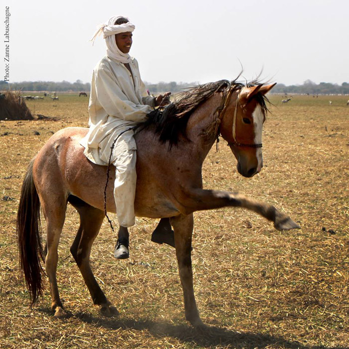 5a8620bee1a6c_chadnomad-stallion-zakouma-ranger-patrols.jpg.b43701ff328a716b90d925f31adba820.jpg
