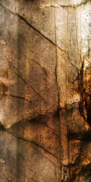 nature-branch-leaf-stone-decoration-green-612044-pxhere_com.thumb.jpg.a25517d1a7619b977ccc21648393a181.jpg