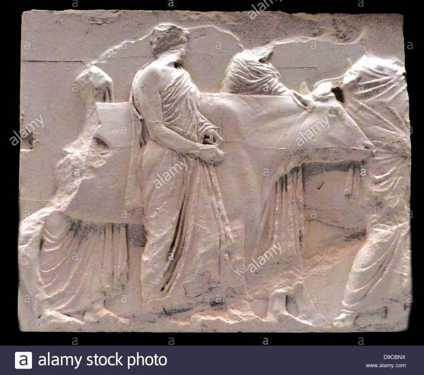 bulls-being-driven-to-sacrifice-depicted-in-part-of-the-parthenon-D9CBNX.thumb.jpg.566a50e8fd4ab3ac2f50b28ac8ef633e.jpg