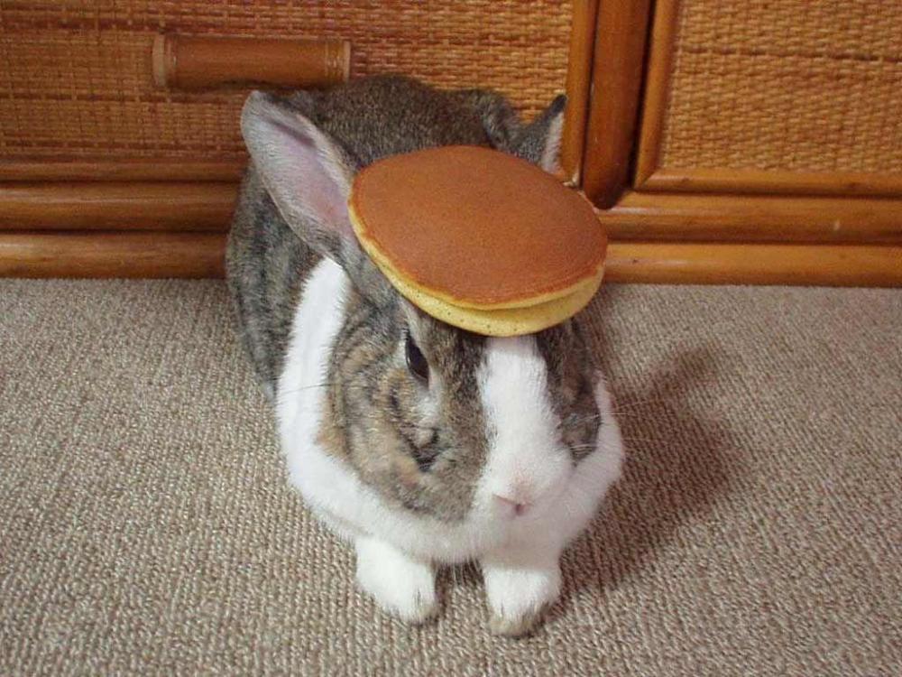 pancake_bunny.thumb.jpg.38ab28c9633e3587e955cbed7b07cc7b.jpg