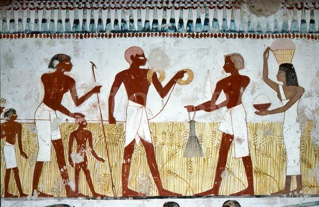 1097573-luxor-egypt-harvest-fresco-in-a-tomb.jpeg.99449d251004df4ff049bd155b46ab4f.jpeg