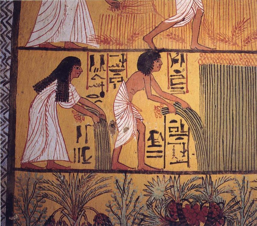 Egyptian_harvest.thumb.jpg.a8b9945a3765e7101489f22b06d3f9bd.jpg