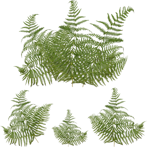 343910522_fernleaves.png.1f0a9489ae82a98dc12934632a3e5061.png