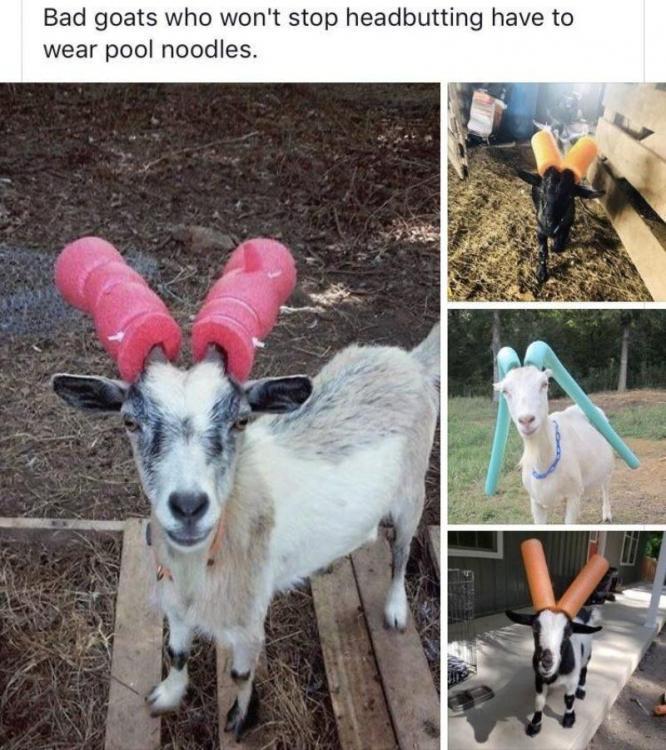 bad_goats.thumb.jpg.22a4ea286749072ee2138d3518fa9484.jpg