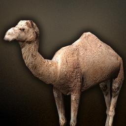 fauna_camel.png