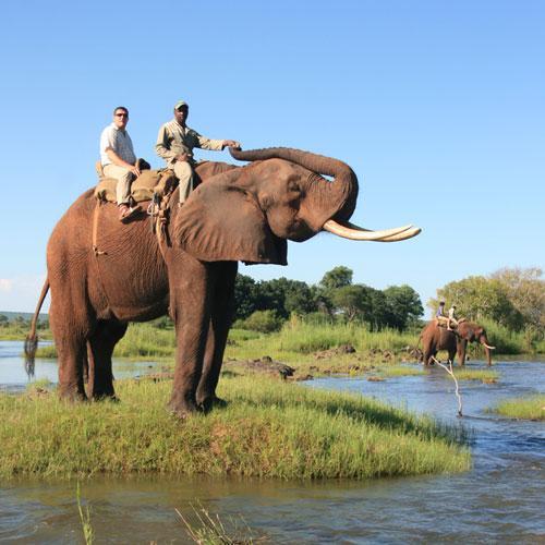 Elephant-Back-Safaris-Victoria-Falls.jpg.81fd0b8b92ea237bf47d402830c4e659.jpg
