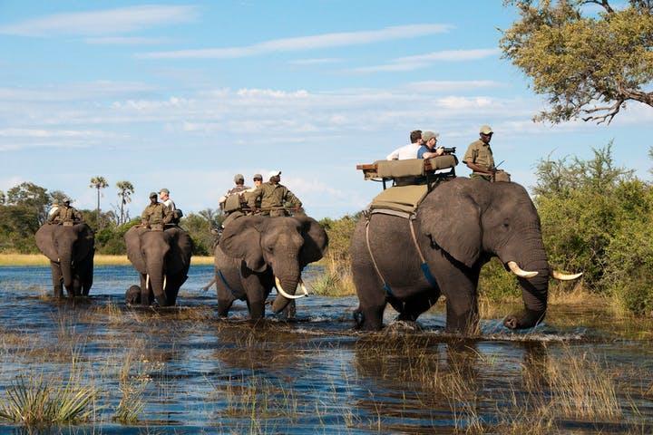 Victoria-Falls-Elephant-Back-Safari.jpg.1cefb6394f1bfc231b260c925c92032d.jpg