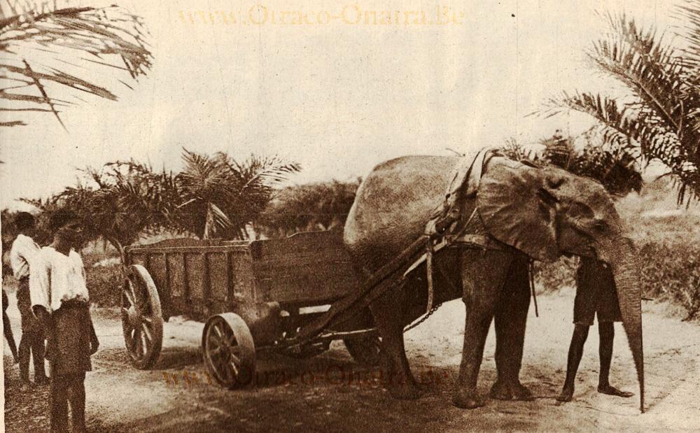 olifant-1925.jpg.2533469ce920fe4b03ec8879d3600497.jpg