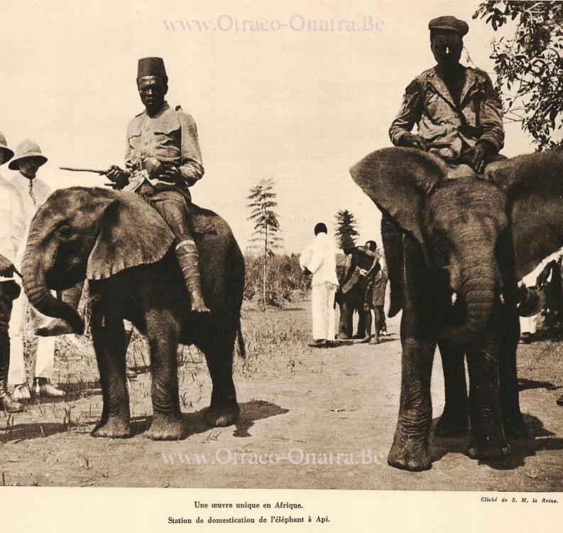 olifanten-api.thumb.jpg.58997aeca3b8cfd13b12c107cb997149.jpg