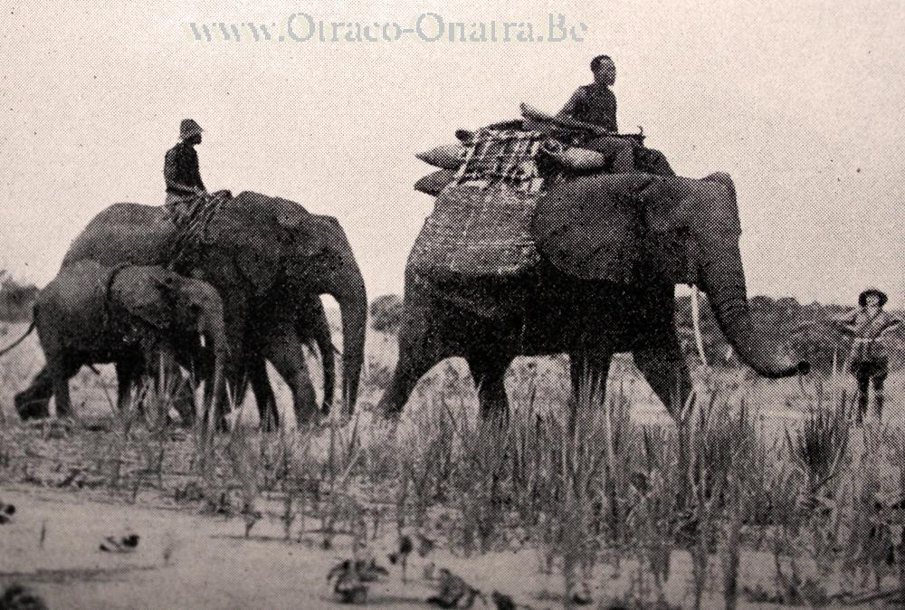 olifanten-dressuur.jpg.6f4ae9c4c5968d7cdec508c7a02bc871.jpg