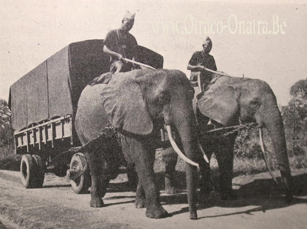 olifanten-laru.jpg.21d99ded90c63c742c175e73e74ad68c.jpg