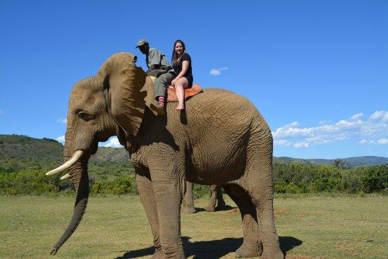 part-1-riding-the-elephant.jpg.340f052bfc59aa61da8d72acafeb49ff.jpg