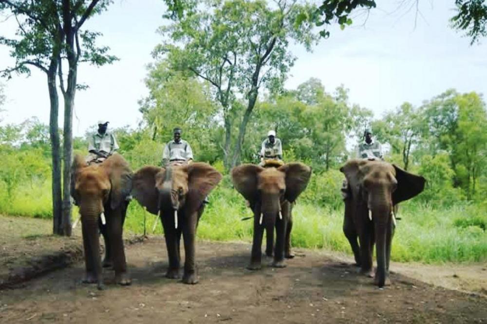 1682875050_Africanelephantsforest.thumb.jpg.11aa3eb489a94e3a8a703d509d7a95cc.jpg