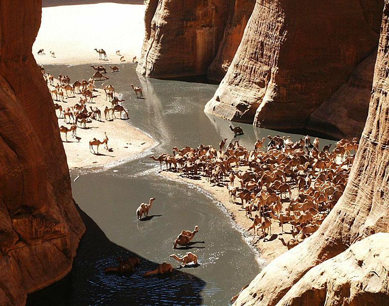 GueltaCamels.jpg.63a0d7182c7d350a9dff5b5b5a9b294c.jpg